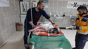 Van'da Yaralı Bulunan Köpek Tedavi Altına Alındı