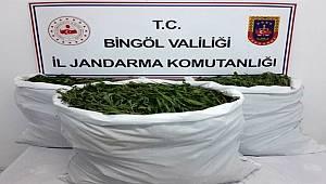 Bingöl'de tarlaya operasyon: 860 bin kök kenevir ele geçirildi