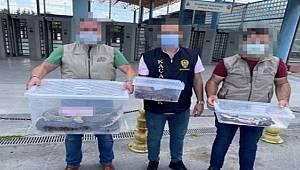 İstanbul Kaçakçlık Suçlarla Mücadele Şube Müdürlüğü ekipleri Satışa Hazır Piton Yılanı ele geçirdi
