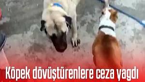 Konya'da Köpek dövüştüren 3 kişiye Ceza