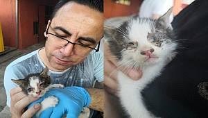 Adana'da bitkin haldeki yavru kediye Emniyet Müdürü sahip çıktı