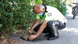 Antalya'da Sıcaktan Bunalan Kaplumbağaya Polis Şefkati