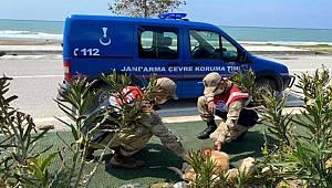 Jandarma ekipleri sokak hayvanlarını unutmadı