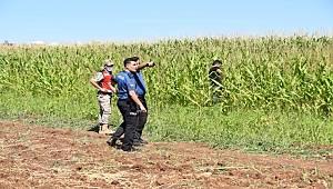 Şanlıurfa'da yurda yasa dışı yollarla giren 17 yabancı uyruklu yakalandı