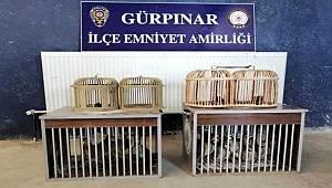 Van'da 2 pitbull'a el konuldu, sahiplerine 28 bin lira ceza kesildi