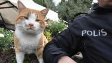 Polis uygulama noktasına sığınan kedi 'Cemşit' ekiplerin maskotu oldu